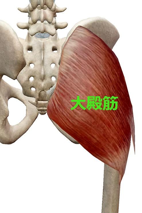 慢性腰痛の黒幕1、大殿筋