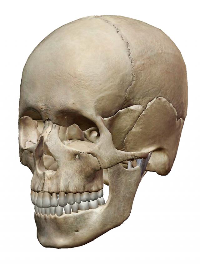 頭蓋骨調整